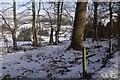 NT2838 : Roadside strip, Kailzie by Richard Webb