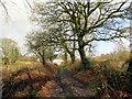 SN5826 : Llwybr Ty Newydd / Ty Newydd Path : Week 4