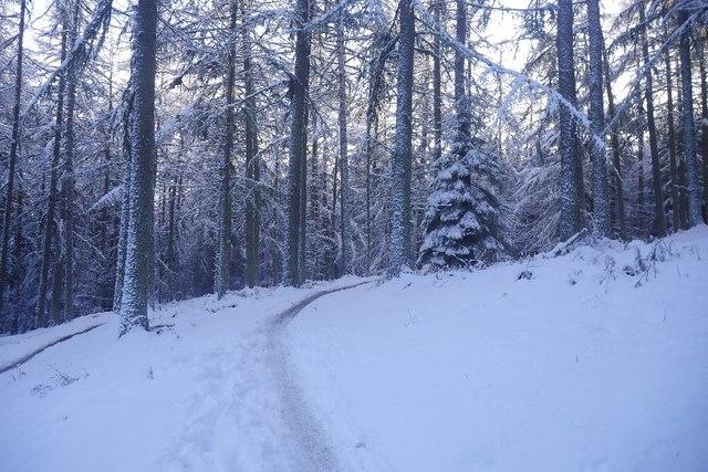 Fala Brae climb, Glentress Forest