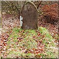 NH5154 : Dogs Cemetery by valenta