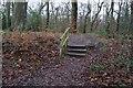 SK3282 : Footpath in Ecclesall Wood, Sheffield by Ian S