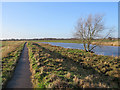TL5377 : On the Fen Rivers Way path in January by John Sutton