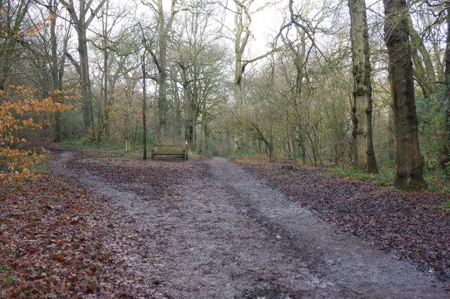 Pinfields Wood