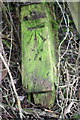 SP4917 : Benchmark on discarded gatepost in Station Road hedge by Roger Templeman