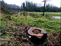 H4772 : Rotted tree stump, Cranny by Kenneth  Allen