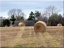 NJ0459 : Hay bales near Forres by John Lucas