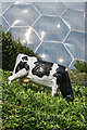 SX0454 : Model cow , Eden Project by Ian Capper
