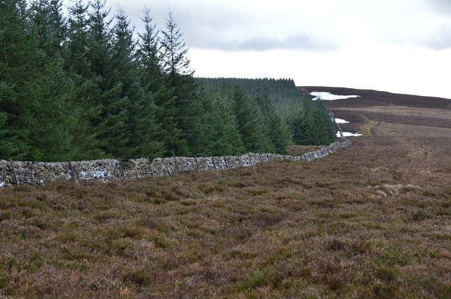 Forestry and heather moor, Hunt Law