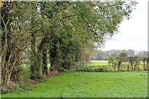 TL4948 : Shelterbelt by N Chadwick