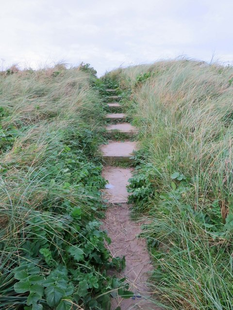 Path over the coastal dune