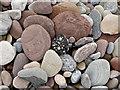 NH8197 : Beach pebbles below Ferry Wood : Week 5
