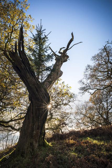 Treetop.