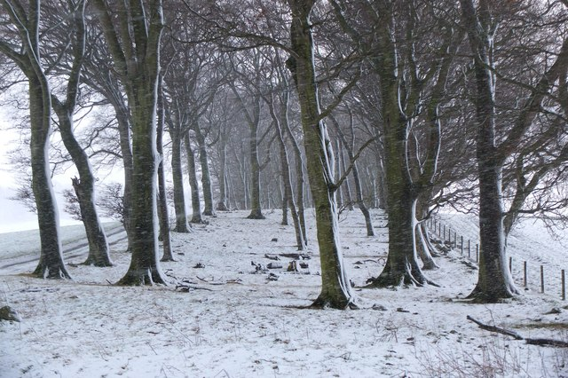 Snow in the shelter belt, Boreland