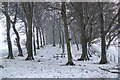 NT2447 : Snow in the shelter belt, Boreland by Jim Barton