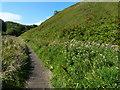 NZ4442 : Path next to Warren House Gill by Mat Fascione
