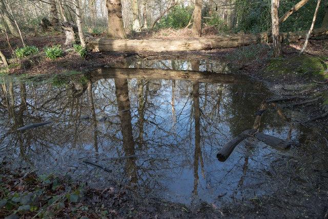 Pond in Williams Wood, Trent Park