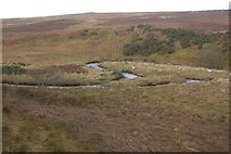 NO1148 : Loop in the Lornty Burn by Richard Webb