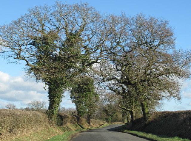 Cryuch Lane