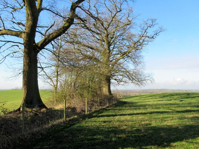 Monarch's Way Crossing Field Near Astwood Farm
