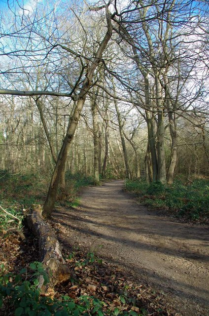 Woodland Path in Beckenham Place Park