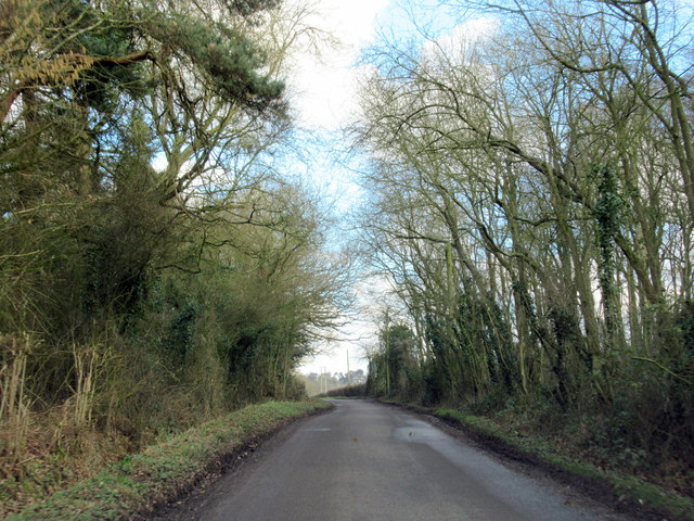 Holyoakes Lane at Cocksian Covert