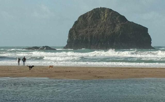 Dogs on the beach, Trebarwith Strand