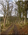 NH6753 : Tree-lined track, by Bay Farm by Craig Wallace