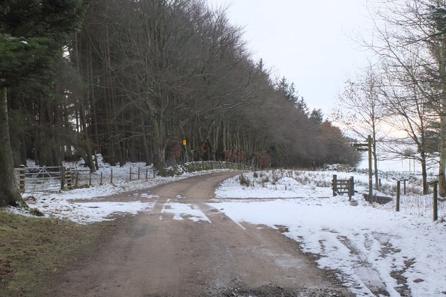 Path junctions at Swiss Cabin Wood
