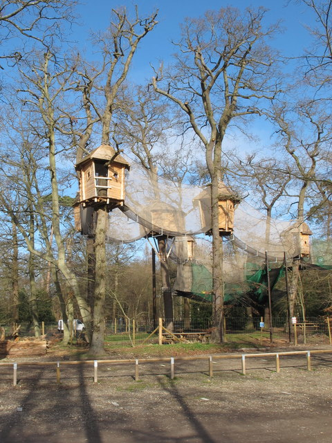 """Go Ape"" nets and platforms in trees, Black Park"
