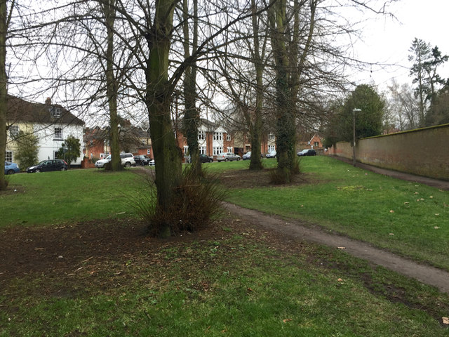 Open space with lime trees by Marriotts Walk, Stowmarket