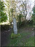 SX7481 : Stone cross, Manaton churchyard by David Smith