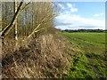 SO3457 : Farmland near Lewis Wych by Philip Halling