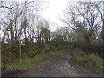 SX7283 : The lane to Langdon by David Smith