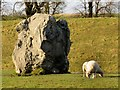 SU1070 : Sheep grazing by a standing stone by Steve Daniels