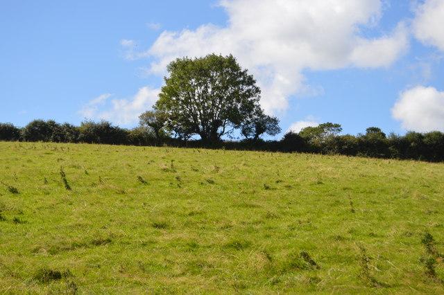 Cornish field