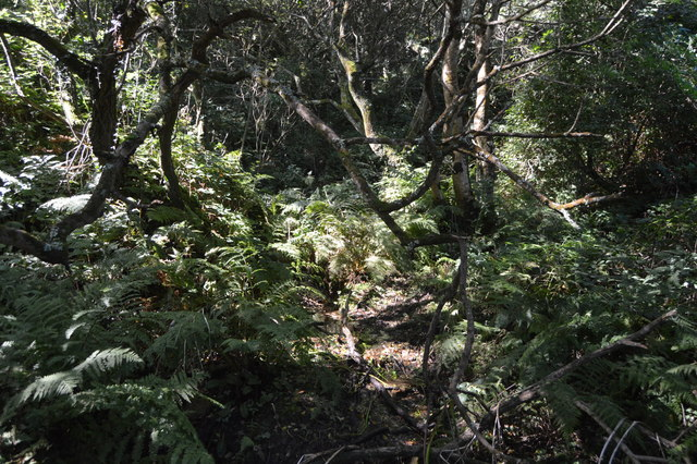 Woodland undergrowth