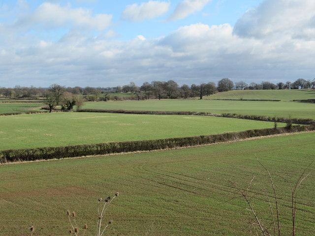 Field From Public Footpath Near M5 at Whittington