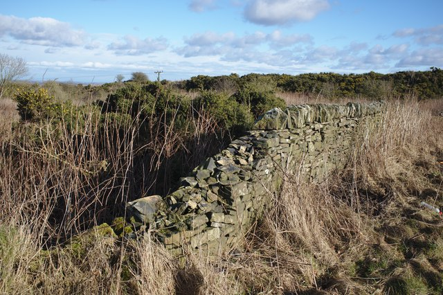 Stone wall and Gorse