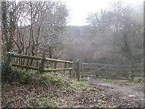 SX7383 : Private woodland, Hourder Plantation, Yarde by David Smith
