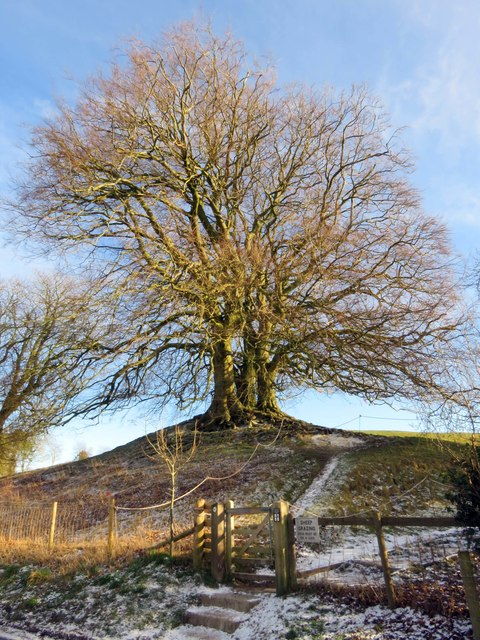 Trees on the earthworks at Avebury