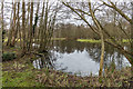 TG3017 : Wetland by Ian Capper
