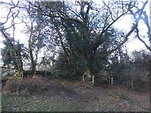 SX7581 : Stile into woods in Neadon Cleave by David Smith