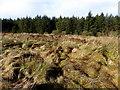 H4740 : Jenkin Forest, Altagoaghan : Week 7