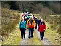 H5041 : First Omagh Church Walking Group, Jenkin Forest,  Mullaghfad by Kenneth  Allen