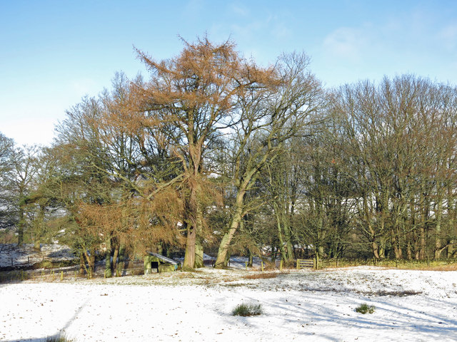 Pasture and copse near Shilburn in the snow