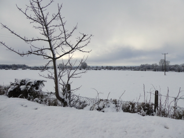 Wintry at Racolpa