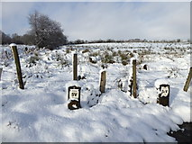 H5173 : Posts in the snow, Killycurragh by Kenneth  Allen