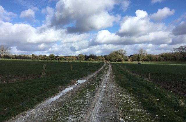 Fields near Black Barn Farm