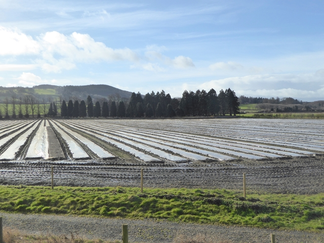Tree nursery at Dilston Haughs