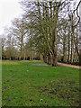 TL4458 : The Backs: February crocuses by John Sutton